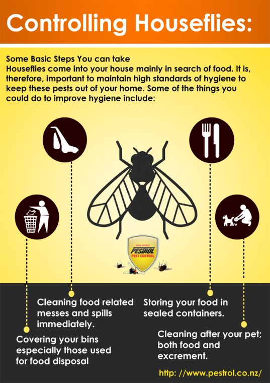 Controlling Houseflies 10 Steps